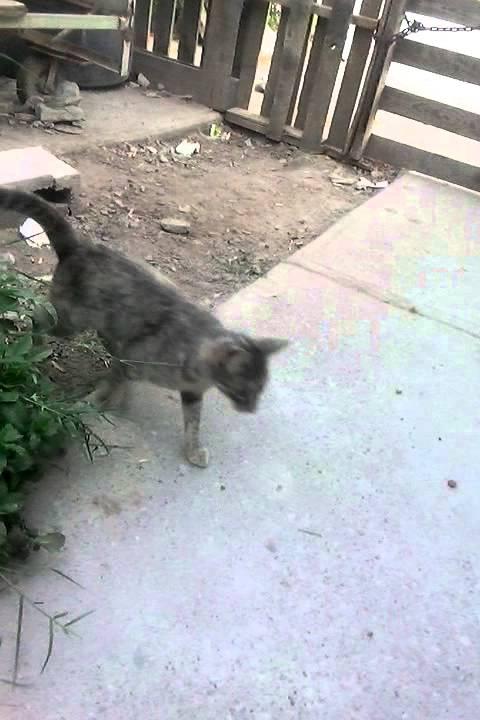 Gato mareada