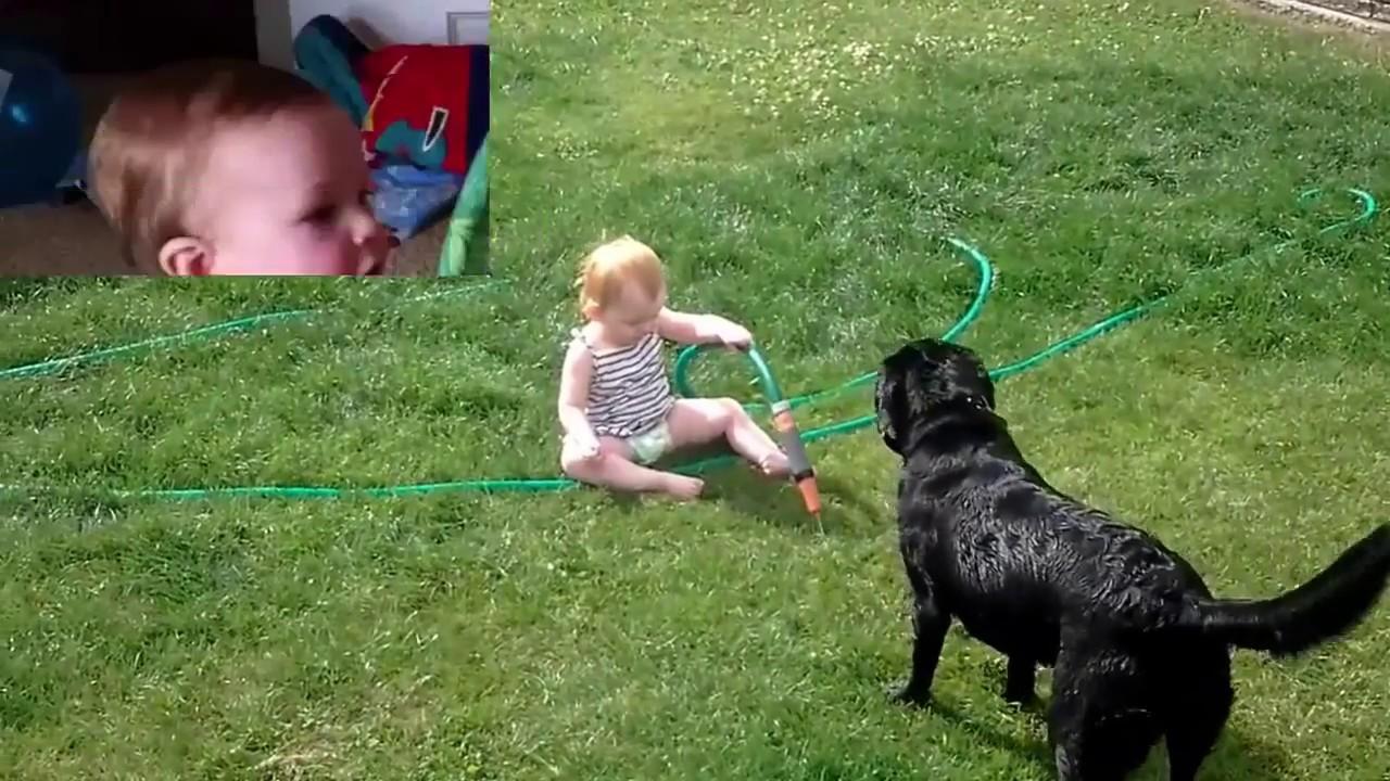 63be20743 مواقف اطفال مضحكة مواقف مضحكة للكلاب مع الاطفال - YouTube