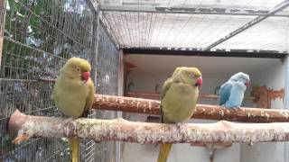 HD Parrot MACAW  - AVIARY for different breeds of BIRDS