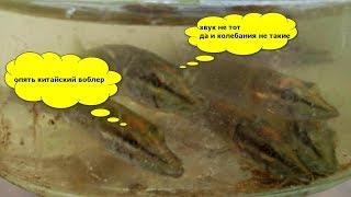 Рыбалка на китайский воблер, а щуки оказались любители оригинала :)