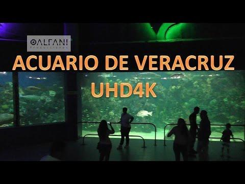 ACUARIO DE VERACRUZ  4K