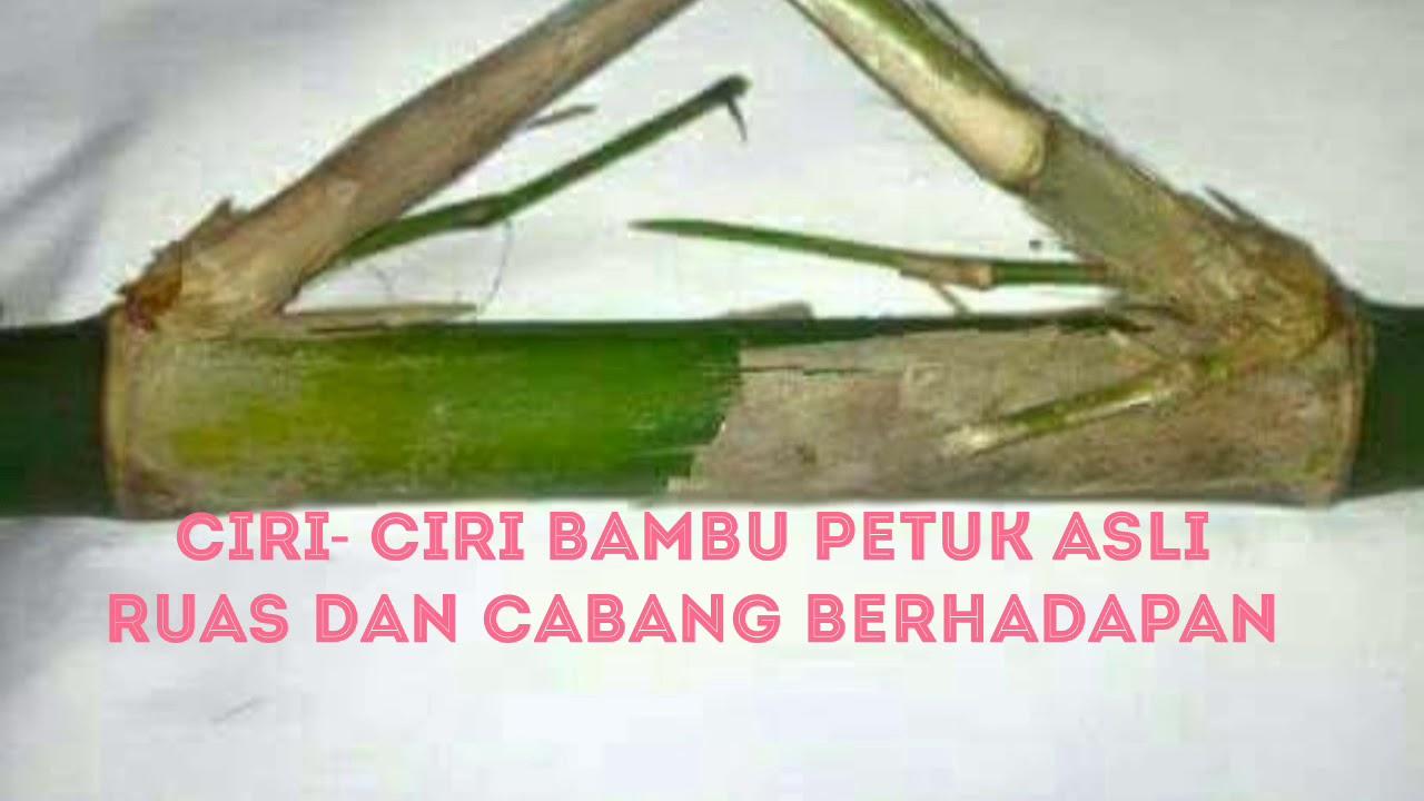 CIRI - CIRI BAMBU PETHUK ASLI RUAS DAN CABANG BERHADAPAN ...