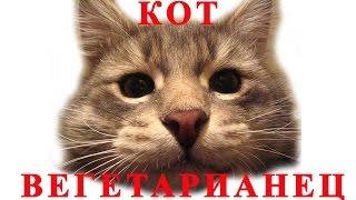 Для тех кто любит смотреть смешные видео приколы про котов и кошек: Вечно голодный кот!