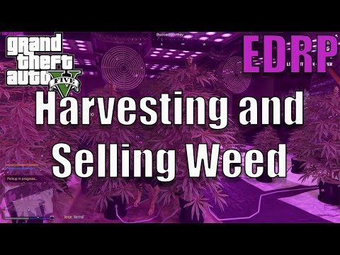 GTA 5 Roleplay | EDRP #4 - Harvesting and Selling Weed - YouTube