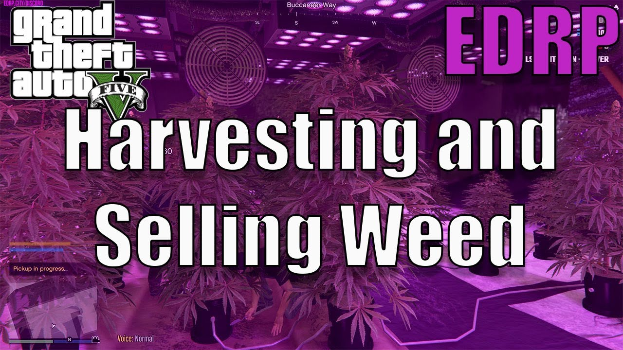 GTA 5 Roleplay | EDRP #4 - Harvesting and Selling Weed