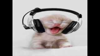kedi apaci dansı komik