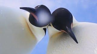 Diese Pinguine sahen ziemlich bedrohlich aus, doch es gibt gute Neuigkeiten!