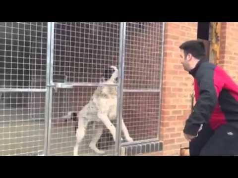 Central Asian Shepherd Guard Dog