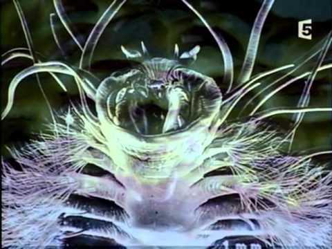 Aux Frontières De La Sciences - Aux Confins De L'univers en streaming