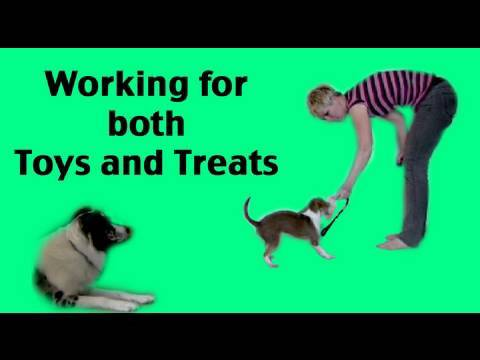 How to train your dog to work for toys and food- professional dog training