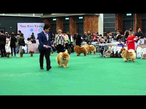 2016 HKKC 212 Dog Show Chow Chow