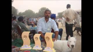 dog kennel in punjab ,dog breeder in punjab,dogo argentino in punjab,pakistani bully, dogo