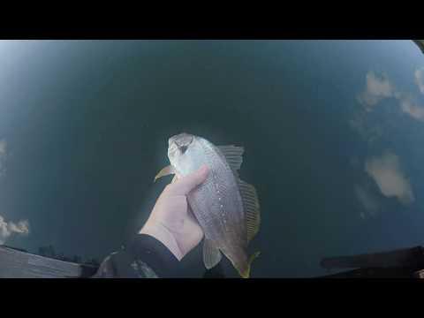 SALTWATER Fishing In MANDURAH