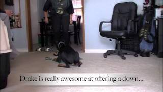 Capturing A Down With Drake: Clicker Dog Training