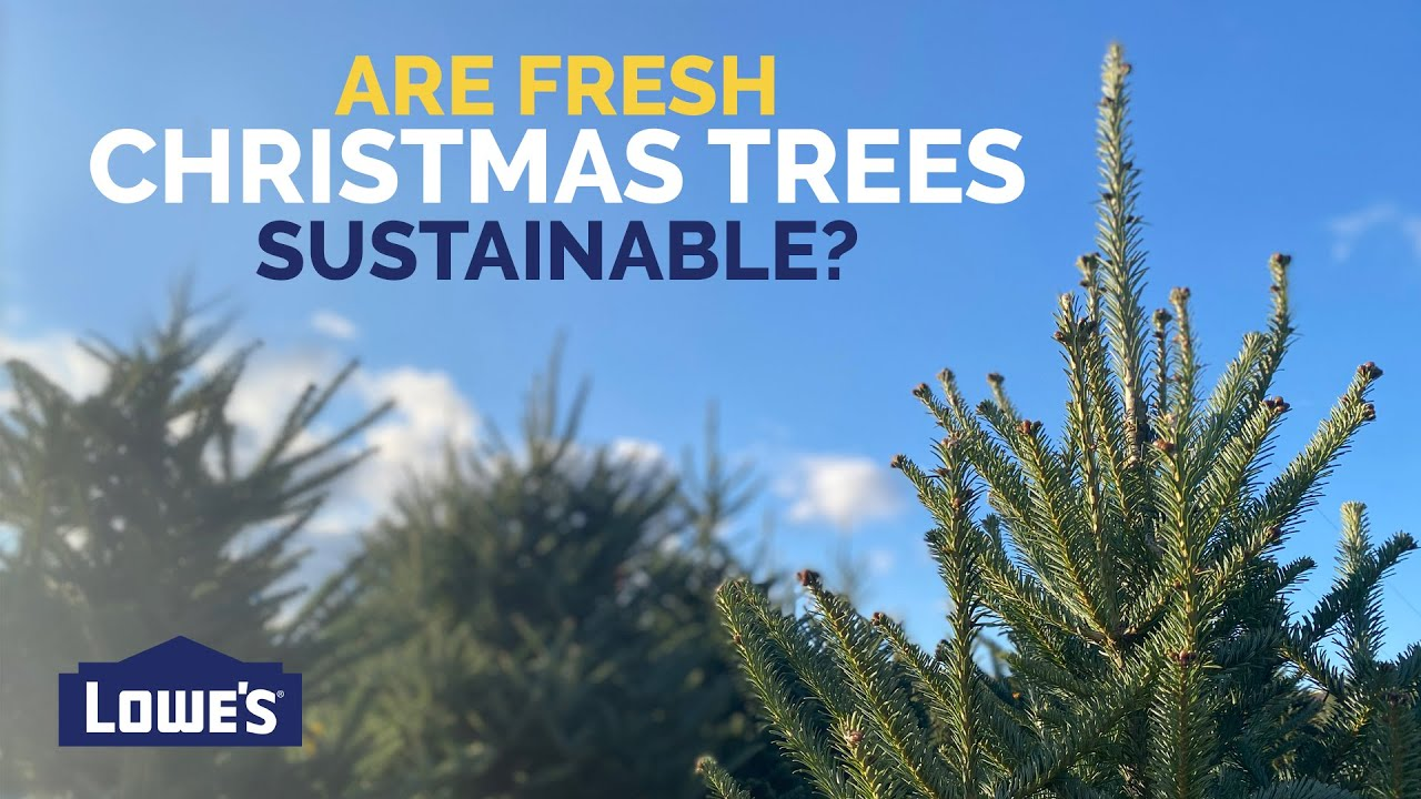 Are Real Christmas Trees Sustainable? | Lowe's