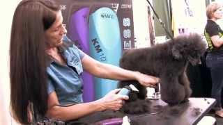 Sue Zecco: Mini Poodle German Trim
