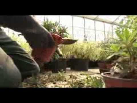 Les jardins suspendus le havre youtube for Jardins suspendus le havre horaires