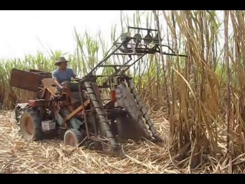 Máy thu hoạch mía của Việt Nam