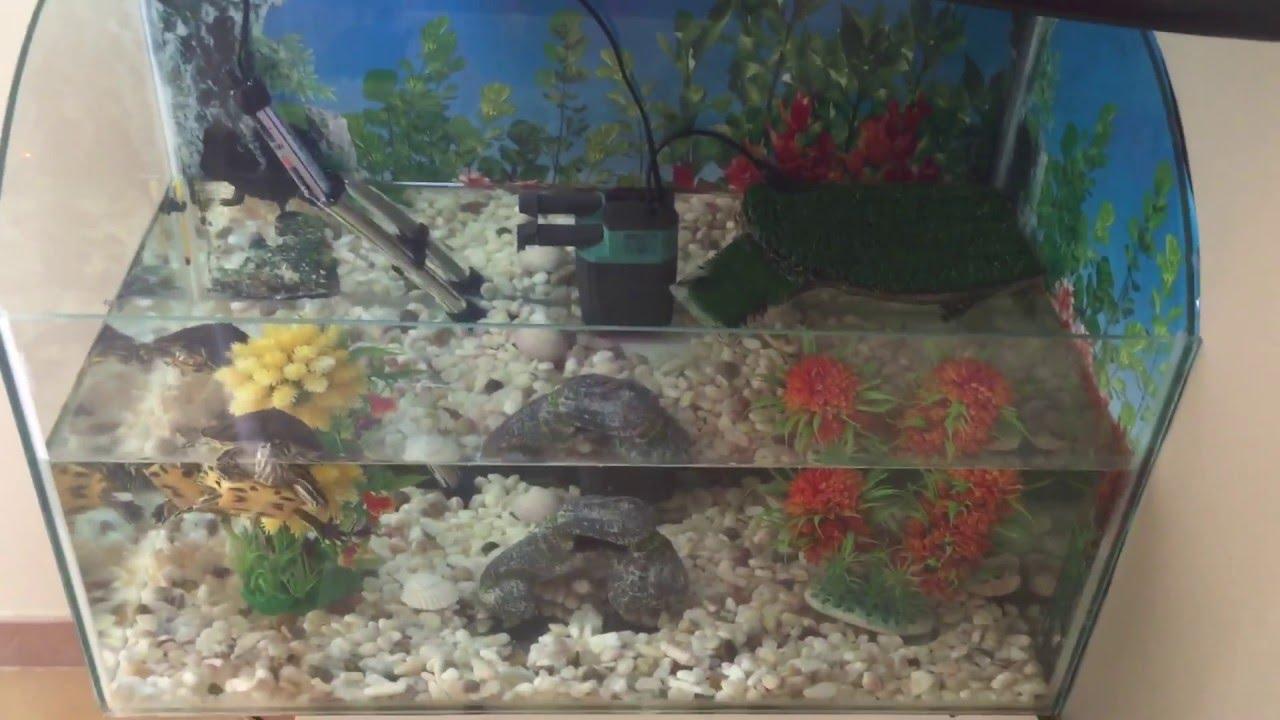 Tartarughe d 39 acqua dolce youtube for Filtro acqua tartarughe