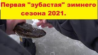 Зимняя рыбалка Первая зубастая сезона 2021 Рыбачим на жерлицу Winter fishing season 2021