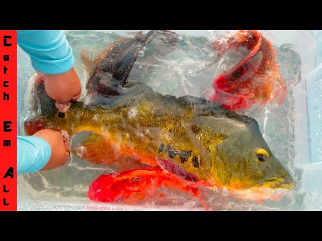 COLORFUL FISH in the STREET! into POOL POND!