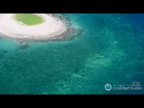 Effect of Climate Change : Loss of Great Barrier Reef