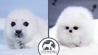 Video Cute Seals VS Funny Dogs download MP3, 3GP, MP4, WEBM, AVI, FLV Juli 2018