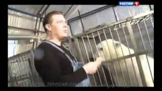 Диалоги о животных - Белые медведи
