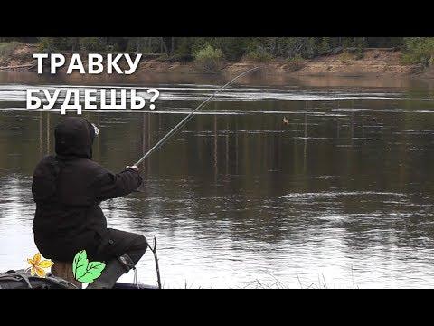 Предложил ТРАВКИ НА РЫБАЛКЕ... Что будет дальше? Рыба оценит! Фидер - Б.Р.№674