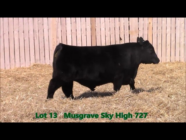 Musgrave Angus Lot 13
