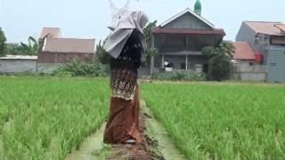 Video Clip Lagu Sunda Mawar Bodas