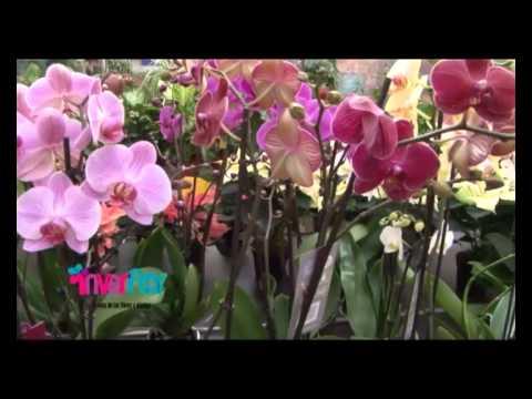Conoce Viveros Inverflor para tener las plantas y flores m�s bonitas