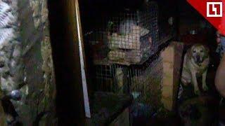 Десятки собак, кошек и тараканов в квартире