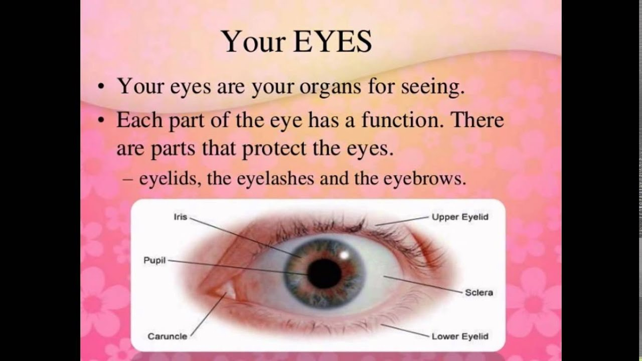 Parts Of Eye And Their Functions - YouTube