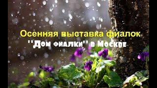 Осенняя выставка фиалок в Москве Дом фиалки 22/10/2017