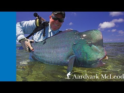 Aquahulk - Fly Fishing For Bumphead Parrotfish