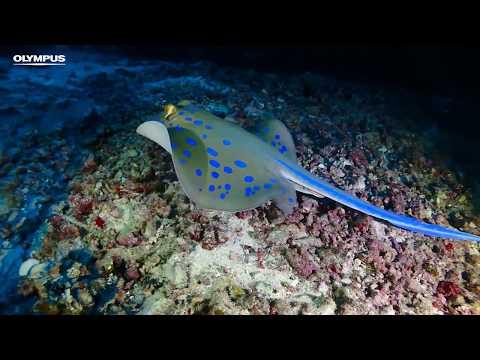 OLYMPUS TOUGH TG-Tracker - Underwater Adventures in Egypt