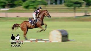 Animals Speak [by Mahidol] ชูกำลังให้ม้ากีฬา