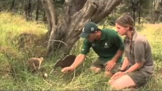 Kiwi Avoidence Training