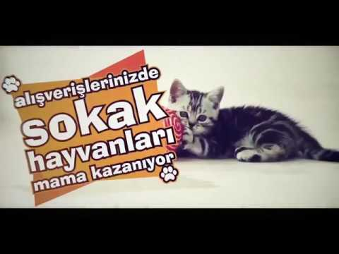 Eve Mama Ankara Homeless Animals Social Responsibilty Video for Social Media by Empty Works Media