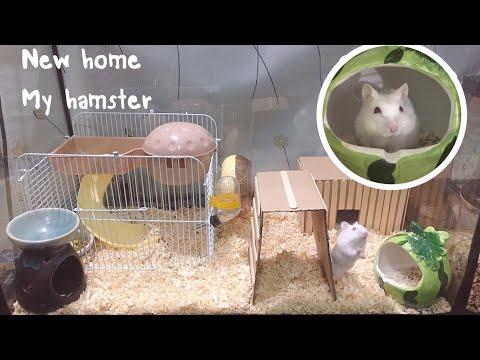 New homemy hamster หนูแฮมสเตอร์กับบ้านหลังใหม่(ราคาประหยัด) hamster story ep.5