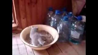 Котёнок сходил в туалет)