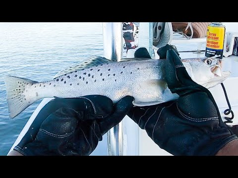 Venice, Louisiana Day 1: Speckled Trout And Redfish