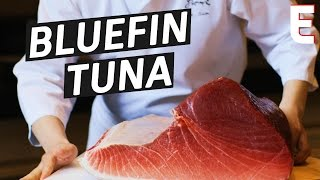 How To Make Sushi Out of a 450 Pound Bluefin Tuna