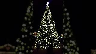 Christmas Tree Lightning Kannapolis NC