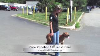 """Red Tick Hound""""jesse:"""" Amazing Distractions! Hounds Can Be Off Leash, Too!"""