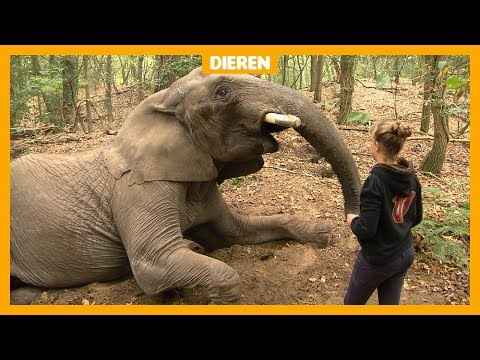 Olifant Buba mag tóch bij Sharon (12) blijven