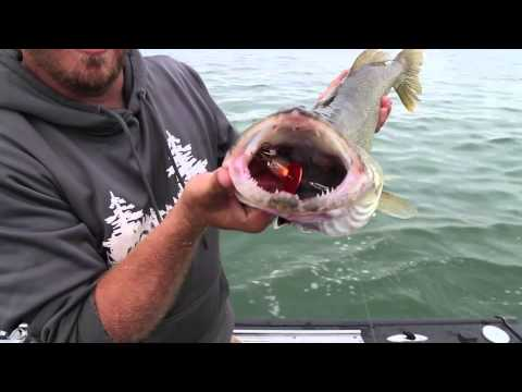 Lake Erie Walleye Fishing with Crankbaits