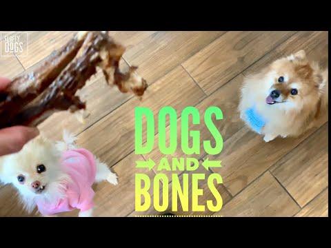 pomeranian's-love-bones