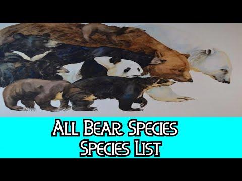 All Bears Species - Species List